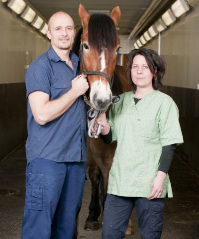 Bild: Hästkliniken Romme